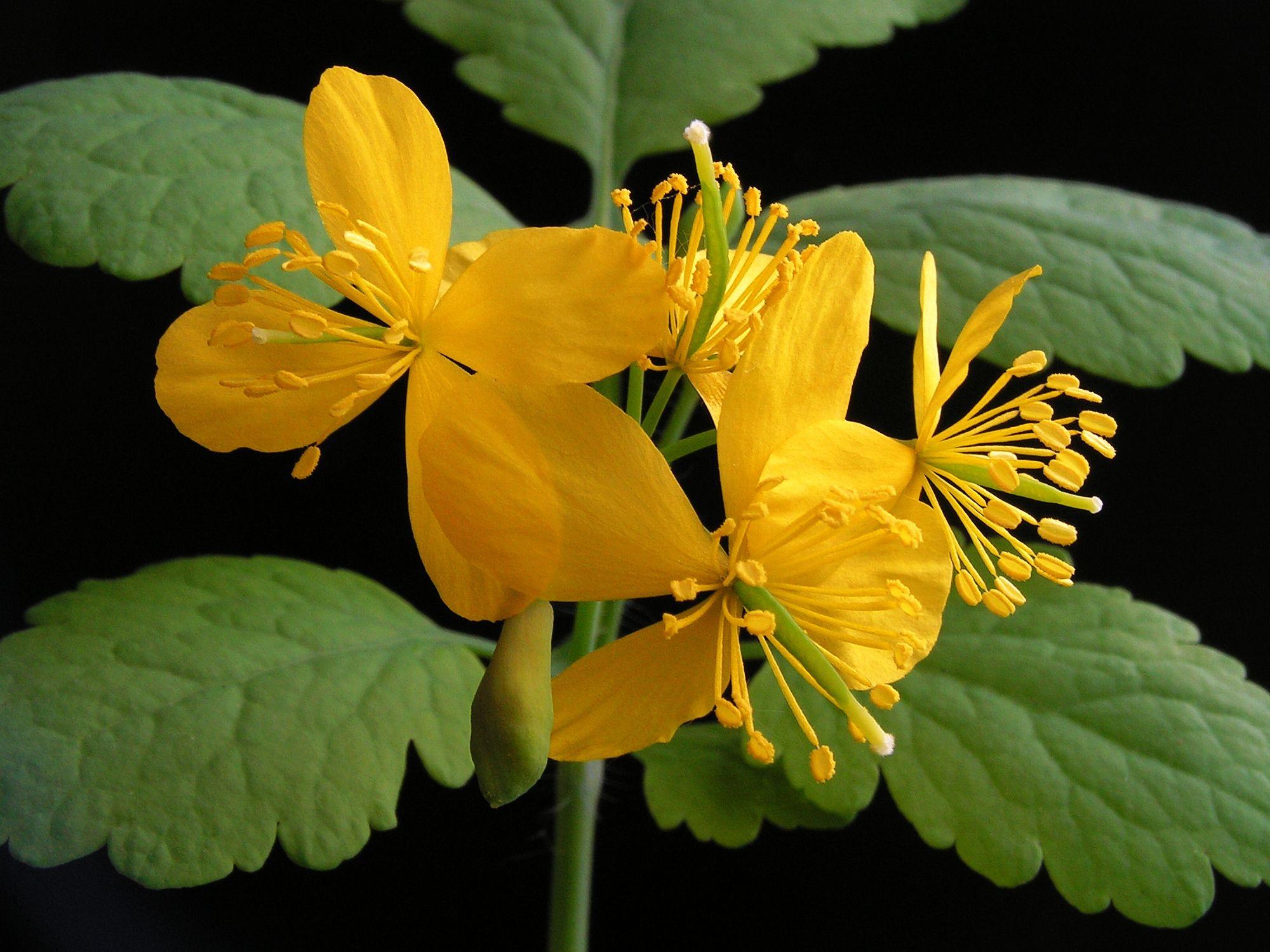 Как вылечить простатит лекарственными травами и растениями