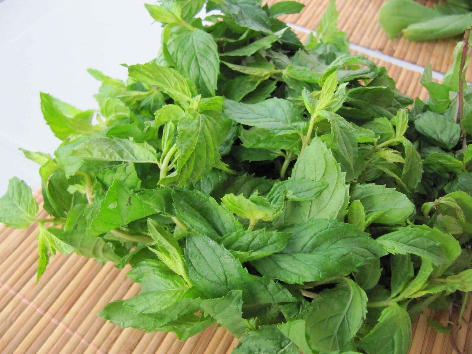Народное лечение отита с помощью лекарственных трав, растений и овощей