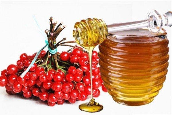 Гроздь калины и мёд