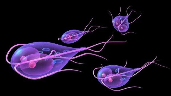 как вылечить паразитов у человека