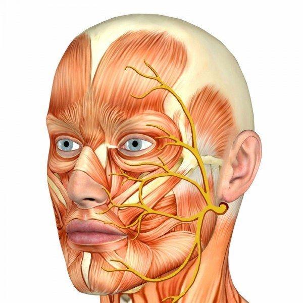 Тройничный нерв лица, схема