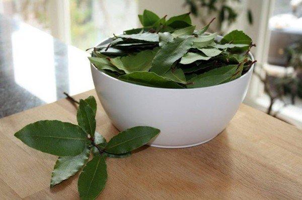 Листья лавра в чашке