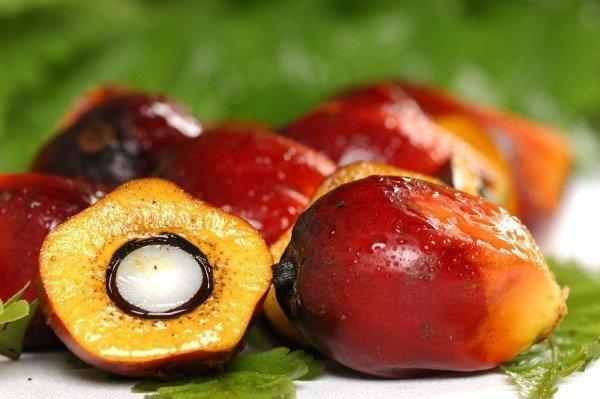 Плоды красной пальмы