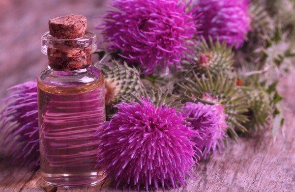 Репейное масло и цветки репейника