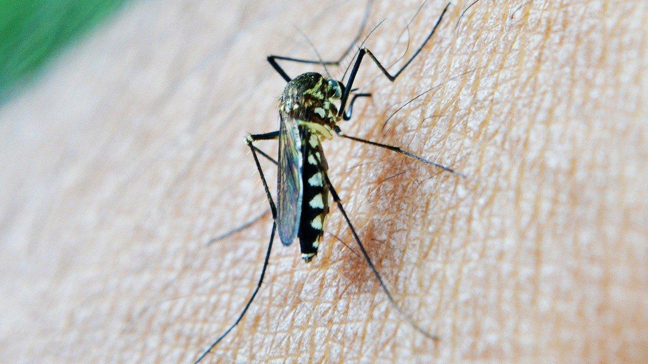 Лечим укусы комаров народными средствами