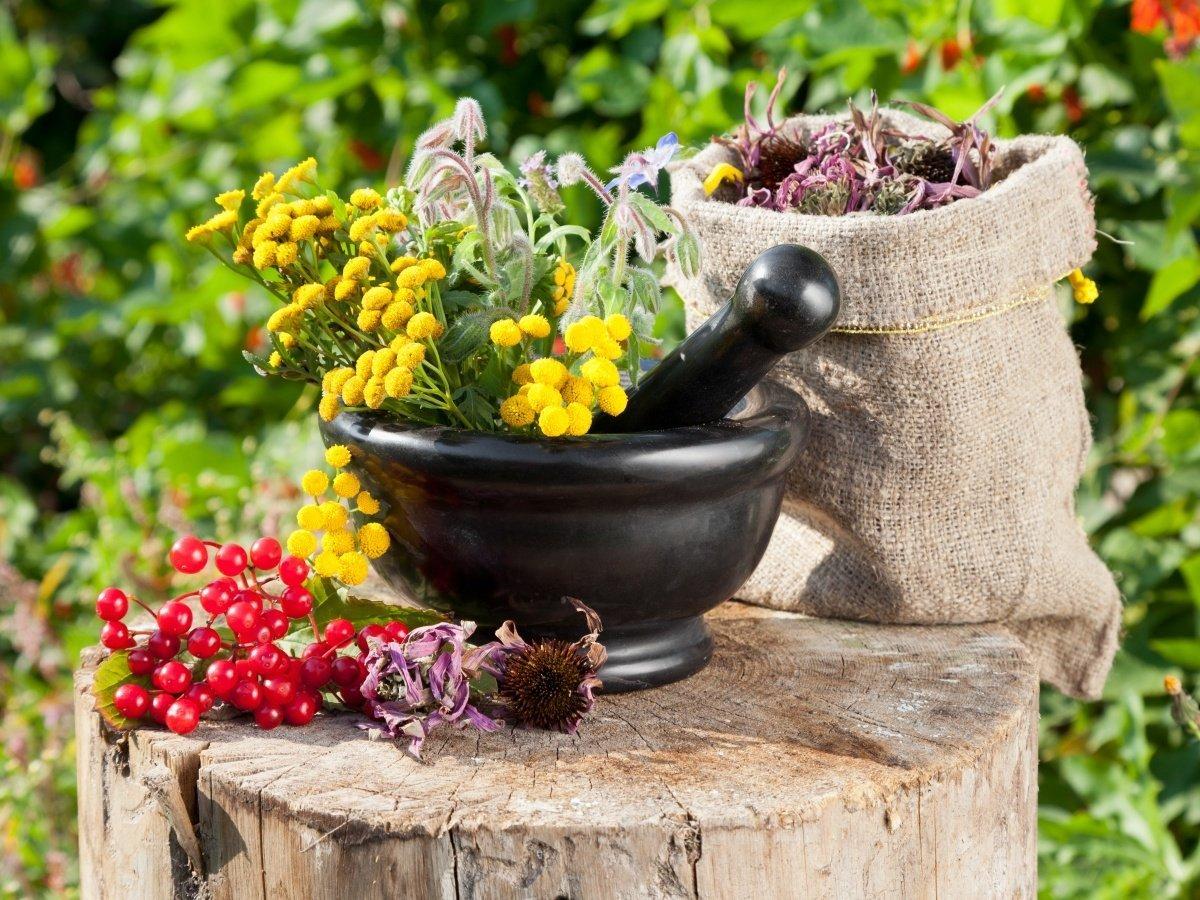 Травы от камней в почках – рецепты ЗОЖ