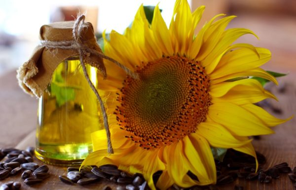 Подсолнух и масло из его семян