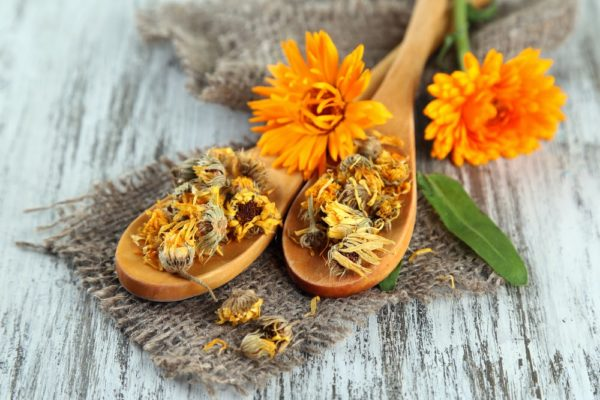 Цветки календулы и сушёное сырьё
