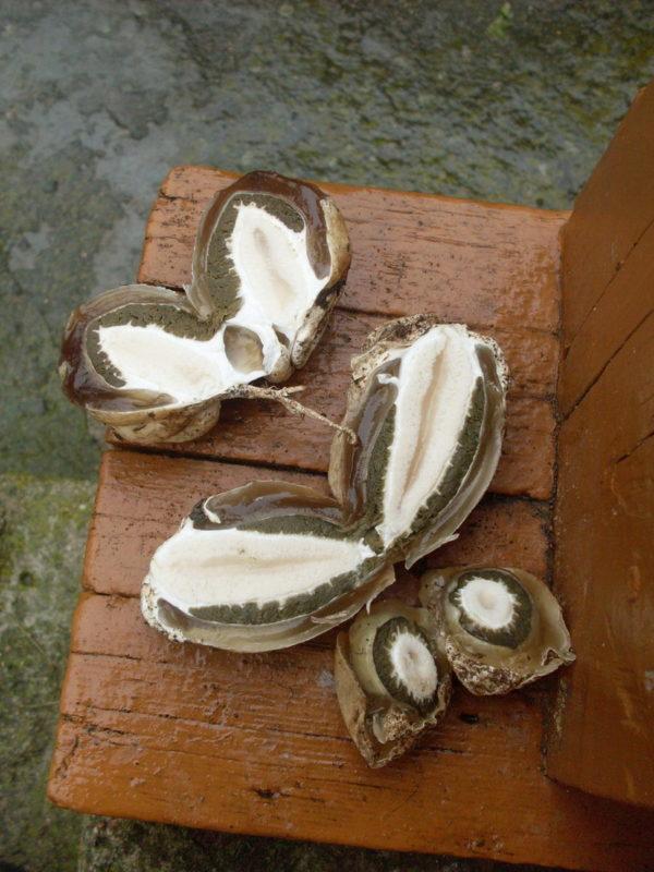 Разрезанные «яйца» весёлки