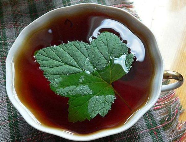 Чай из чёрной смородины
