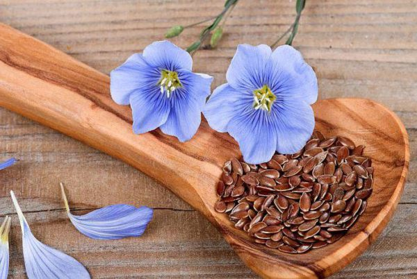 Цветы и семя льна