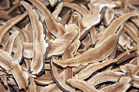 Резаный древесный гриб