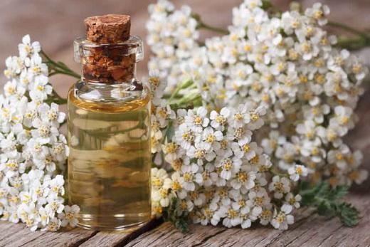 Бутылочка с настойкой и цветы тысячелистника