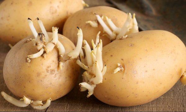 Клубни картофеля с ростками