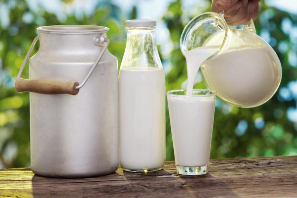 чай с молоком на ночь для похудения