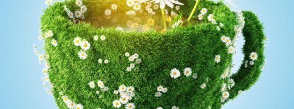 Чашка из трав и цветов