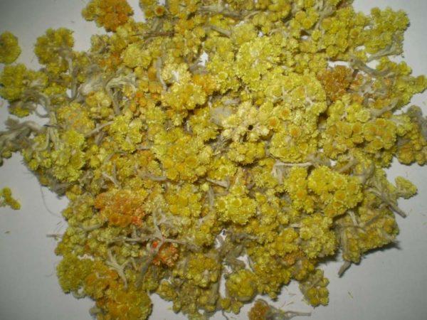 Засушенные цветы цмина на столе