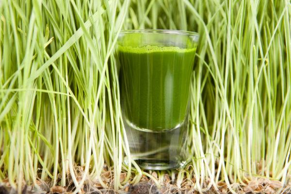 Зелёные ростки и фреш из них