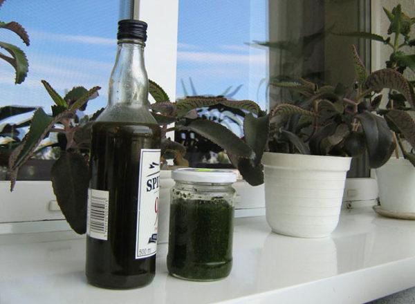Каланхоэ и настойка в бутылке