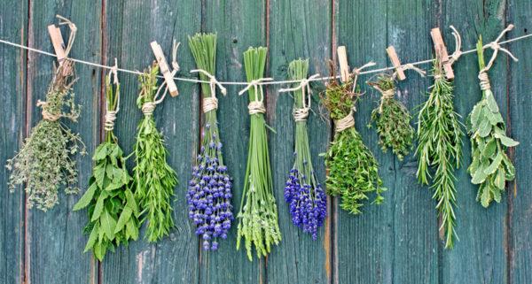 Травы лекарственные