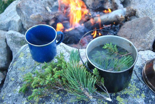 Чай из хвои на костре