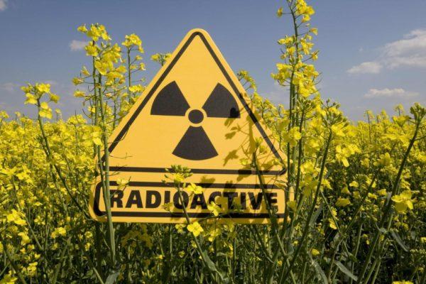Знак радиоактивного облучения среди полевых цветов