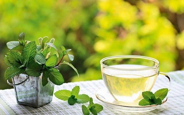 Травяной чай из мяты