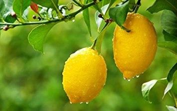 Ваше сердце и лимон