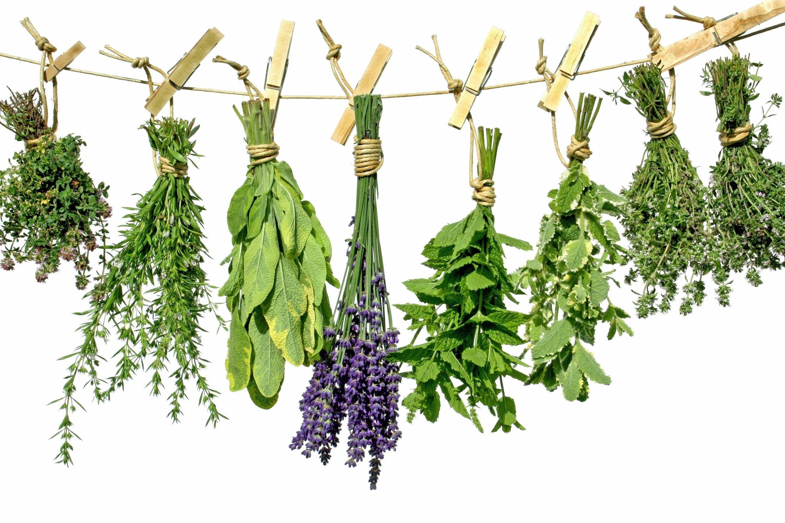 Действенные методы лечения геморроя лекарственными травами